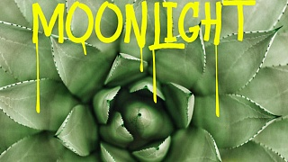 Moonlight - Tequila